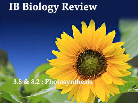 IB Biology Review 3.8 & 8.2 : Photosynthesis. Relationship Between Photosynthesis and Respiration Products of photosynthesis are reactants in respiration.