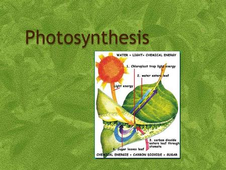 Photosynthesis. Objectives 3.8.1 – State that photosynthesis involves the conversion of light energy into chemical energy. 3.8.2 – State that light from.