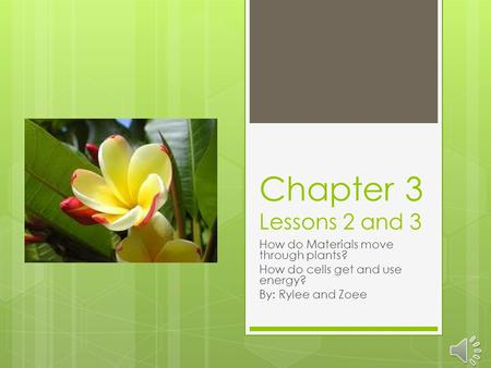 Chapter 3 Lessons 2 and 3 How do Materials move through plants? How do cells get and use energy? By: Rylee and Zoee.