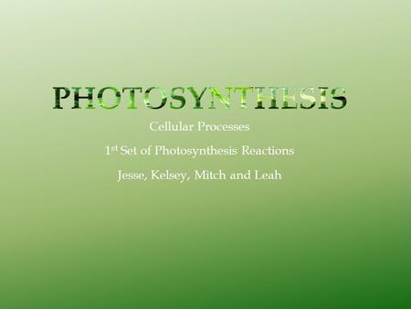 Cellular Processes 1 st Set of Photosynthesis Reactions Jesse, Kelsey, Mitch and Leah.