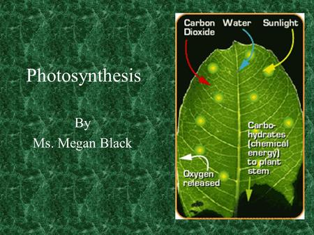 Photosynthesis By Ms. Megan Black Photosynthesis Photosynthesis is the process of making food by plants The essential ingredients in making this.