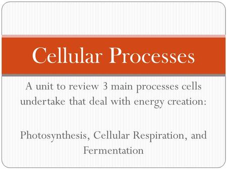 Photosynthesis, Cellular Respiration, and Fermentation