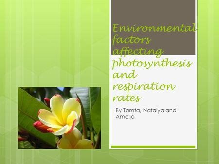 Environmental factors affecting photosynthesis and respiration rates By Tamta, Natalya and Amelia.