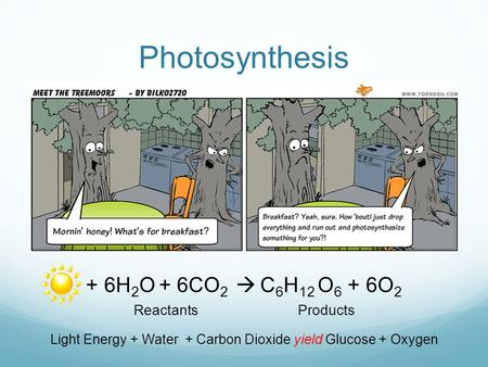 Photosynthesis + 6H 2 O + 6CO 2  C 6 H 12 O 6 + 6O 2 Reactants Products Light Energy + Water + Carbon Dioxide yield Glucose + Oxygen.