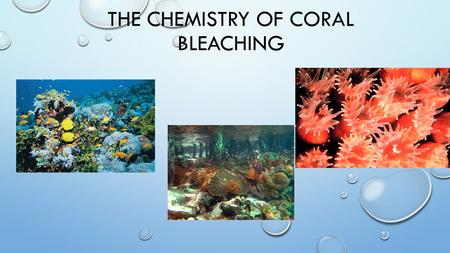 THE CHEMISTRY OF CORAL BLEACHING. WHAT IS A CORAL? CORALS ARE MARINE INVERTEBRATES (ANIMALS) THEY CAN TAKE MANY SHAPES! THEY USUALLY LIVE IN COLONIES.