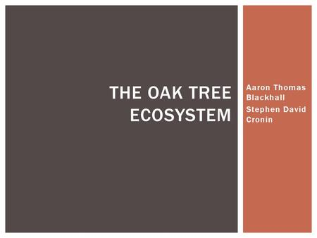 Aaron Thomas Blackhall Stephen David Cronin THE OAK TREE ECOSYSTEM.