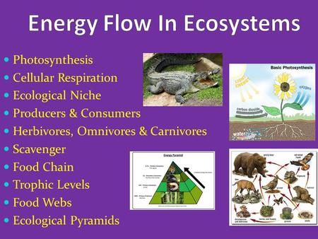 Photosynthesis Cellular Respiration Ecological Niche Producers & Consumers Herbivores, Omnivores & Carnivores Scavenger Food Chain Trophic Levels Food.