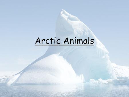 Arctic Animals.