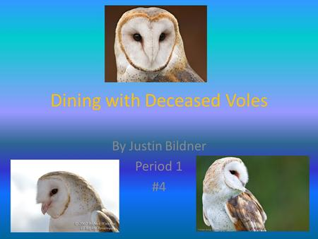 Dining with Deceased Voles By Justin Bildner Period 1 #4.