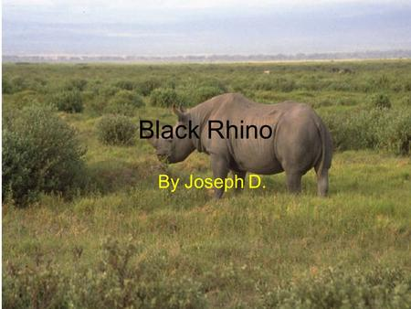 Black Rhino By Joseph D. Physical Characteristics Have huge bodies 4 short legs Skin is gray and very thick Have two horns.