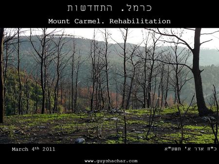Www.guyshachar.com כרמל. התחדשות Mount Carmel. Rehabilitation כח אדר א' תשעא March 4 th 2011.