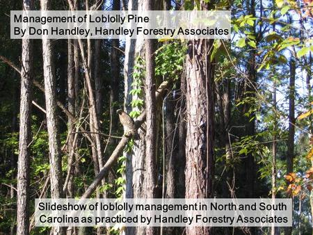 Management of Loblolly Pine By Don Handley, Handley Forestry Associates Slideshow of loblolly management in North and South Carolina as practiced by Handley.