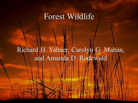 Forest Wildlife Richard H. Yahner, Carolyn G. Mahan, and Amanda D. Rodewald.