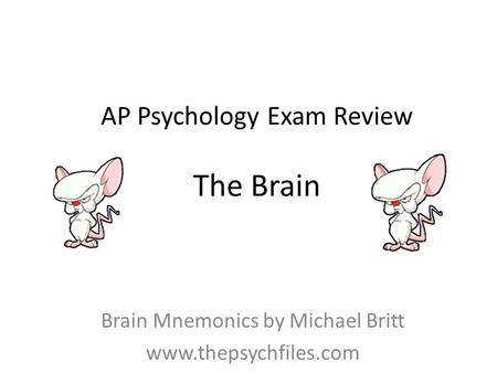 AP Psychology Exam Review The Brain