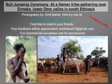 Bull Jumping Ceremony At a Hamer tribe gathering near Dimeka lower Omo valley in south Ethiopia Photography by: Amit Bahat, Visit my site at: www.s-bahat.com/amit.