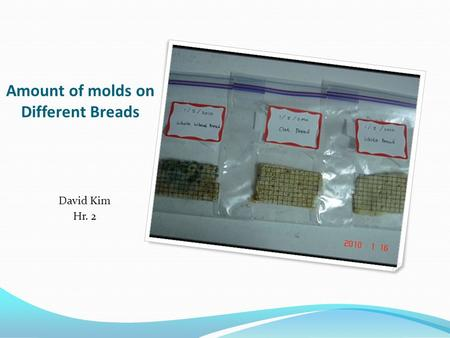 Amount of molds on Different Breads David Kim Hr. 2.