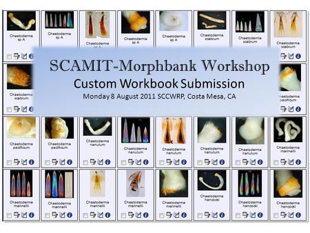 SCAMIT-Morphbank Workshop Custom Workbook Submission Monday 8 August 2011 SCCWRP, Costa Mesa, CA.