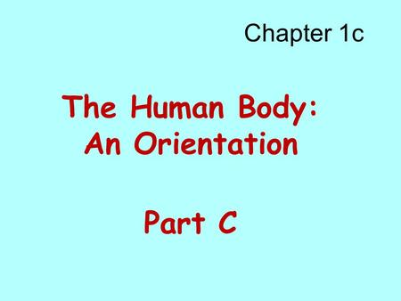 Chapter 1c The Human Body: An Orientation Part C.