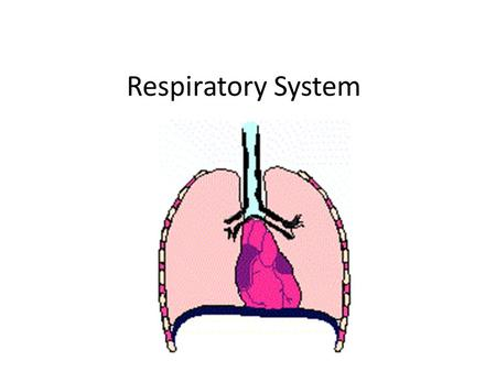 Respiratory System. Respiration Pulmonary ventilation (breathing): movement of air into and out of the lungs External respiration: O 2 and CO 2 exchange.