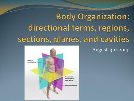 Body Organization: directional terms, regions, sections, planes, and cavities August 13-14 2014.