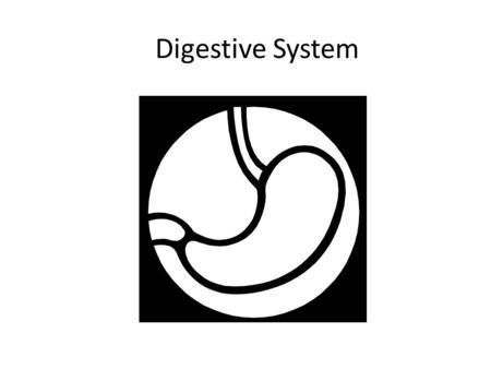 Digestive System. The digestive system is a group of organs working together to convert food into energy and basic nutrients to feed the entire body.