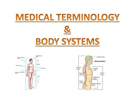 Test scores indicate that students who learn a foreign language have a much stronger grasp of English language skills. Tests also indicate that studying.