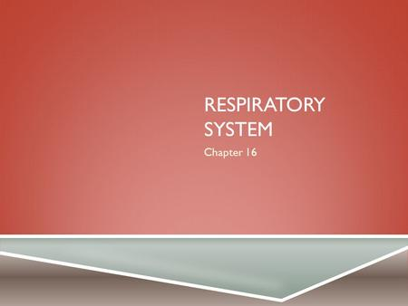 RESPIRATORY SYSTEM Chapter 16. COMPONENTS  Tubes that filter incoming air  Air transported to alveoli (gas exchange)