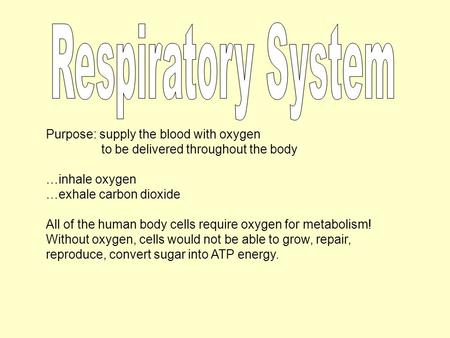 Purpose: supply the blood with oxygen to be delivered throughout the body …inhale oxygen …exhale carbon dioxide All of the human body cells require oxygen.