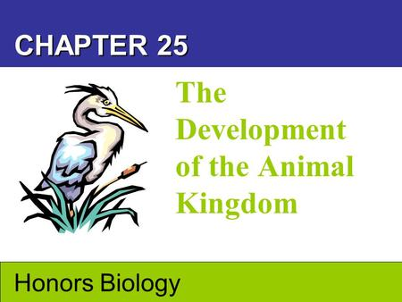 The Development of the Animal Kingdom