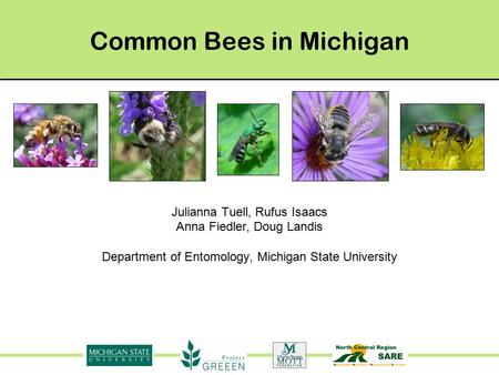 Common Bees in Michigan Julianna Tuell, Rufus Isaacs Anna Fiedler, Doug Landis Department of Entomology, Michigan State University.
