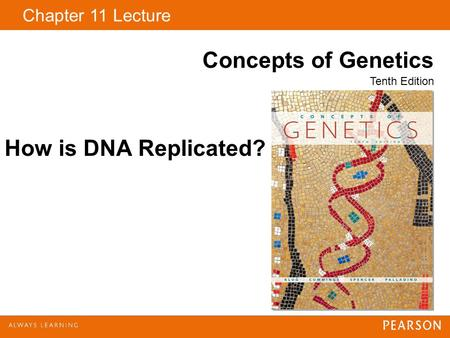 How is DNA Replicated?.