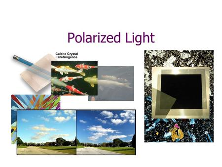 Polarized Light. 1) Unpolarized light is shone at a vertical polarizing filter. Through the filter you get a) all the light b) half the light c) 1/4 of.