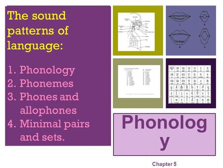 + Phonolog y Chapter 5 The sound patterns of language: 1.Phonology 2.Phonemes 3.Phones and allophones 4.Minimal pairs and sets.