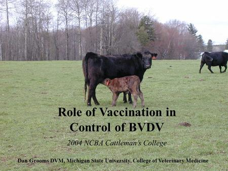 Role of Vaccination in Control of BVDV Dan Grooms DVM, Michigan State University, College of Veterinary Medicine 2004 NCBA Cattleman's College.