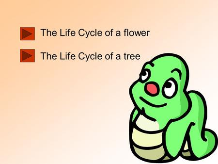 The Life Cycle of a flower The Life Cycle of a tree.