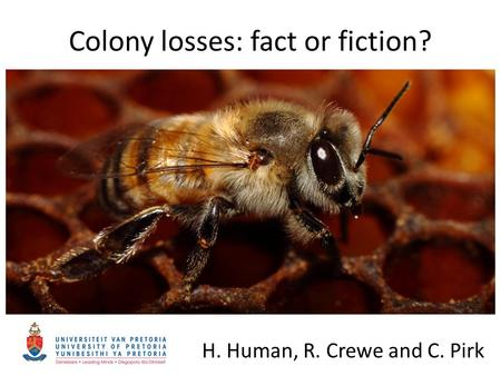 Colony losses: fact or fiction? H. Human, R. Crewe and C. Pirk.