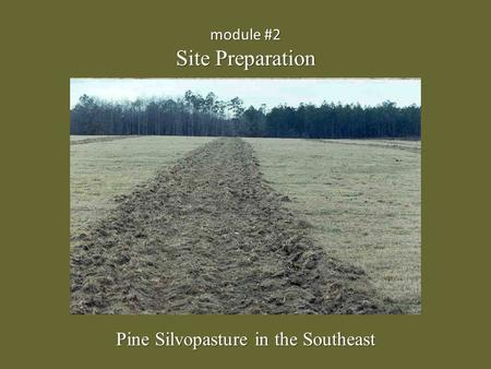 Module #2 Site Preparation Pine Silvopasture in the Southeast.