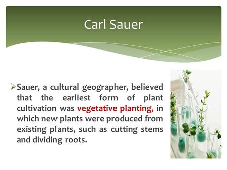  Sauer, a cultural geographer, believed that the earliest form of plant cultivation was vegetative planting, in which new plants were produced from existing.