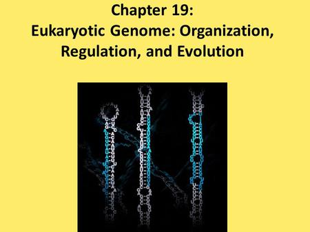 Chapter 19: Eukaryotic Genome: Organization, Regulation, and Evolution.