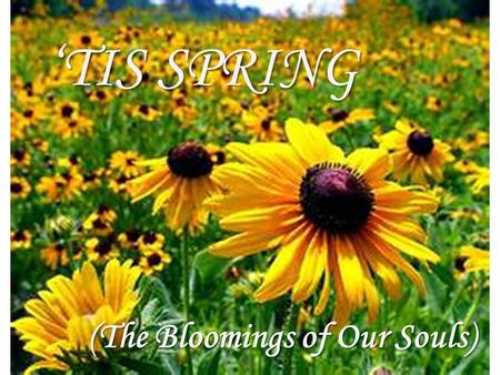 'TIS SPRING (The Bloomings of Our Souls). 'Tis Spring, and our souls bloom with these words. Budding brilliance planted deep within our hearts and minds.