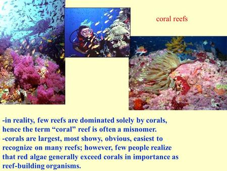 "-in reality, few reefs are dominated solely by corals, hence the term ""coral"" reef is often a misnomer. -corals are largest, most showy, obvious, easiest."