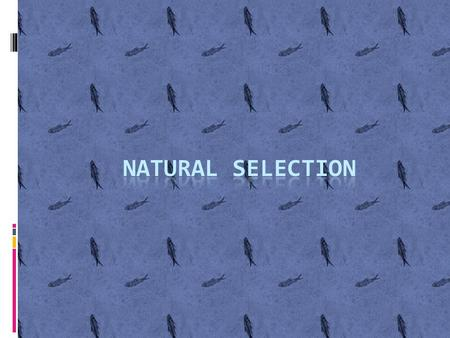 Natural Selection…………  In a nutshell, organisms with favorable phenotypes that allow for adaptation in a particular environment will survive, reproduce,