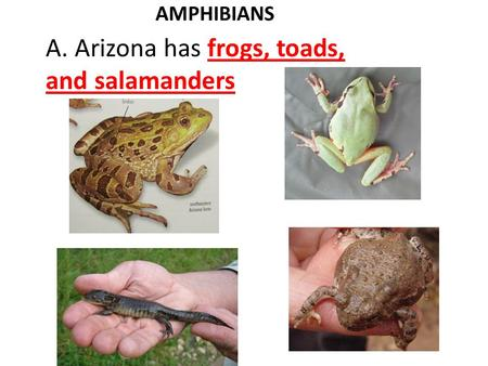 AMPHIBIANS A. Arizona has frogs, toads, and salamanders.