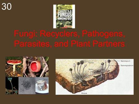 Fungi: Recyclers, Pathogens, Parasites, and Plant Partners