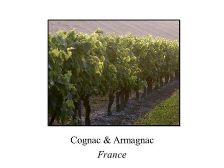 Cognac & Armagnac France. Cognac, France Cognac: France's best-known brandy Peaceful countryside 100 miles north of Bordeaux Medieval town with elegant.