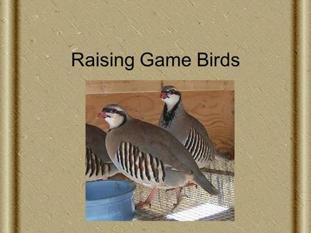 Raising Game Birds. Next Generation Science/Common Core Standards Addressed HS ‐ LS2 ‐ 8. Evaluate the evidence for the role of group behavior on individual.