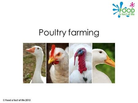 Poultry farming © Food a fact of life 2013. Introduction Chicken, turkey, duck and goose are all types of birds called poultry. They are reared for meat.