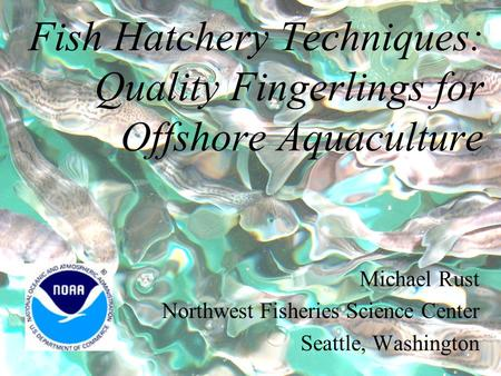 Fish Hatchery Techniques: Quality Fingerlings for Offshore Aquaculture Michael Rust Northwest Fisheries Science Center Seattle, Washington.