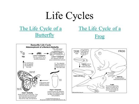 Life Cycles The Life Cycle of a Butterfly The Life Cycle of a Frog.