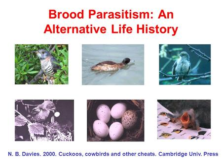 Brood Parasitism: An Alternative Life History N. B. Davies. 2000. Cuckoos, cowbirds and other cheats. Cambridge Univ. Press.